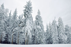 Winter snow-covered forest Stock Image
