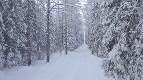 Winter snow-covered forest. Moving the camera forward. Winter snow-covered forest. Moves the camera forward between the trees. Winter forest road stock footage