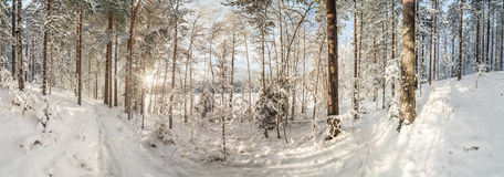 Winter, snow-covered forest on a sunny day. Winter landscape. Stock Photo