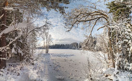 Winter, snow-covered forest on a sunny day. Winter landscape Stock Photos