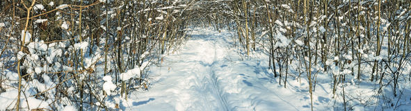 Winter snow-covered road through the deciduous forest, ski track  -  winter landscape, panorama Stock Photo