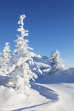 Winter. Snow covered spruces and blue sky. Ural landscape Royalty Free Stock Photography