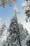 Winter snow covered trees against the blue sky Royalty Free Stock Photos