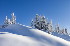 Winter Snow-covered Trees on Mountain Royalty Free Stock Images