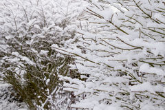 Winter Snow on Deciduous Plant Stock Photo