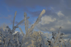 Winter. Snow down coats and twigs on the background of sky Royalty Free Stock Photo