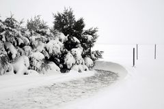 Winter Snow Drift From Trees. A Winter Snow Drift Creating a Path Around Evergreen Trees Stock Photo