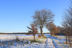Winter with snow the at Dwingelderveld in the Netherlands. Heathland, nature reserve. Stock Photos