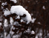 Winter snow etude Stock Photography