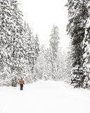 Winter snow falling on a cross country skiier Stock Photo