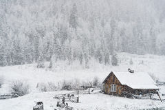 Winter snow falling on log cabin in san isabel national forest Royalty Free Stock Images
