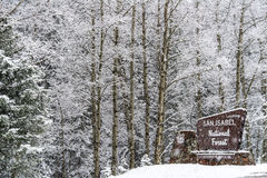 Winter snow falling on san isabel national forest Stock Image