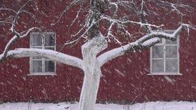 Winter snow falling in village on apple tree trunk stock footage