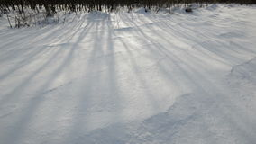 Winter snow field. Shadow of trees. stock video
