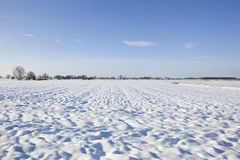 Winter snow fields Stock Photos