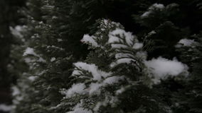 Winter, snow, fir. Falling snowflakes. stock video