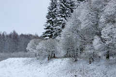 Winter snow on fir tree Royalty Free Stock Photo