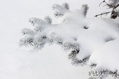 Winter snow with firtree branch Stock Photography