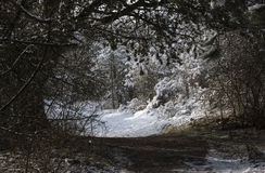 Winter snow in forest Stock Photo