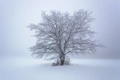 Winter snow forest. Snow lies on the branches of trees. Frosty and foggy snowy weather. Beautiful winter forest landscape. royalty free stock image