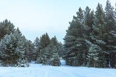 Winter Snow Forest On Sunset Stock Photos