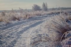 Winter snow forest road landscape. Forest road in winter snow season. royalty free stock images
