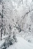 Winter Snow Forest in Rovaniemi royalty free stock photography