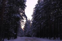Winter snow forest sharakhovskaya road stock photos
