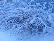 Snow , Russia Royalty Free Stock Photography
