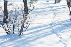winter snow frost drifts traces on the snow path in the park among the bushes and trees stock images
