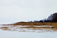Winter snow frozen lake with brown grass and reeds Stock Photo