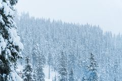 Winter snow House. resort. ate in the snow. Christmas trees in the snow. Mountains landscape royalty free stock images