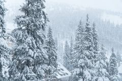 Winter snow House. resort. ate in the snow. Christmas trees in the snow. Mountains landscape. Christmas trees in the snow. Mountains landscape royalty free stock photo