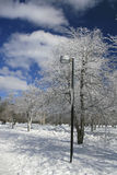 Winter, Snow and Ice Covered Trees, Park Stock Images