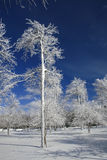 Winter, Snow and Ice Covered Trees, Park Stock Photos