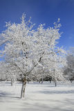 Winter, Snow and Ice Covered Trees, Park Royalty Free Stock Photo