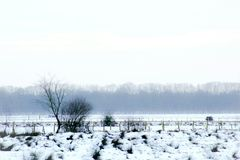 Winter snow landscape Royalty Free Stock Photography