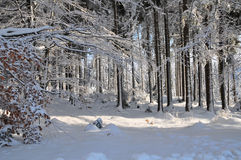 Winter Snow Landscape Forest Stock Images