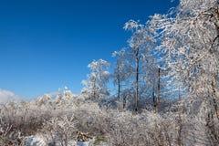 Winter snow landscape, High Fens, Belgium Stock Photos