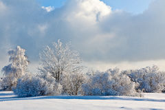 Winter snow landscape, High Fens, Belgium Stock Photography