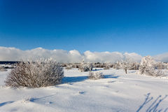 Winter snow landscape, High Fens, Belgium stock image
