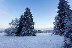 Winter snow landscape, High Fens, Belgium Royalty Free Stock Photos