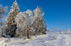 Winter snow landscape, High Fens, Belgium royalty free stock photo