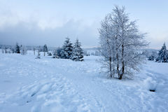 Winter snow landscape, High Fens, Belgium Stock Photo