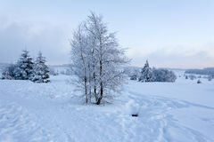 Winter snow landscape, High Fens, Belgium Royalty Free Stock Photo