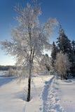 Winter snow landscape hiking path, High Fens, Belgium Stock Photos