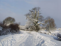 Winter snow landscape. Royalty Free Stock Photography
