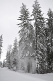 Winter Snow landscape. A winter mountain landscape in Mazama, Washington Royalty Free Stock Photo