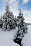 Winter snow landscape, pine trees, water river, High Fens, Belgium Stock Photo