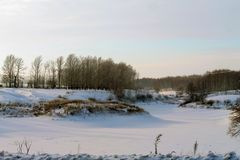 Winter, snow lies, winter trees, royalty free stock photography